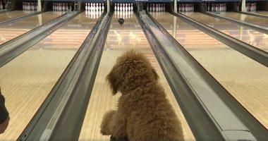 bowling dog blake