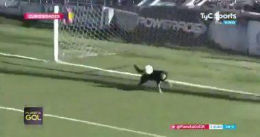 goal dog