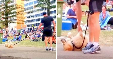 dog plays dead at park cover