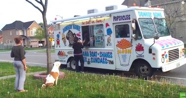 pit bull ice cream truck cover
