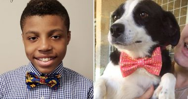 Boy makes bow ties for shelter dogs cover