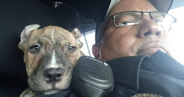 POLICE RESCUE 6-WEEK-OLD PIT BULL BEFORE HURRICANE DORIAN MAKES LANDFALL cover
