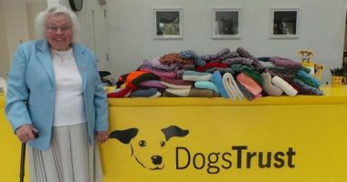 Woman knits blankets for shelter dogs cover