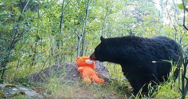 bear teddy bear cover