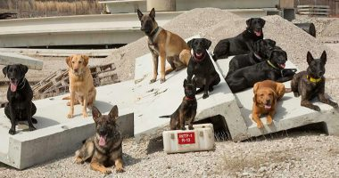 k9 search and rescue cover