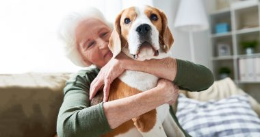 Portrait of elegant senior woman hugging pet dog tenderly and smiling happily while enjoying weekend at home sitting on comfortable couch in modern apartment, focus on beagle dog in foreground