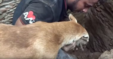mother dog digs out pups cover
