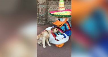 service dog donald duck cover