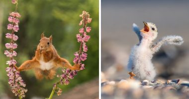 38 Hilarious Animal Photos From The Comedy Wildlife Photography Awards cover