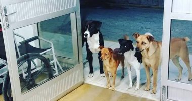 Dogs Go To The Emergency Room To Wait For Homeless Owner Who Is Getting Medical Help cover