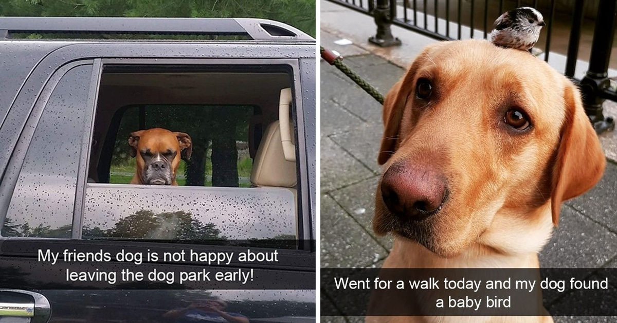 21 Of The Funniest Dog Snapchats Of All Time Dog Dispatch