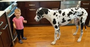 girl teaches dog to sit cover