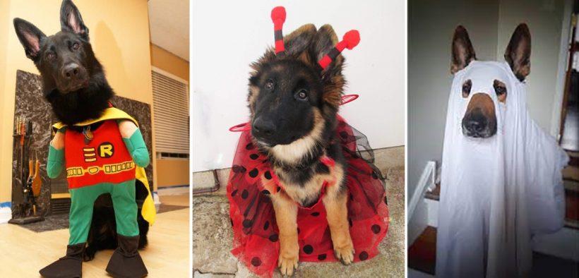 21 Best German Shepherd Halloween Costumes