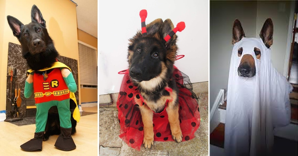 German Shepherd Costumes