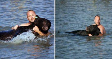 man saves bear cover