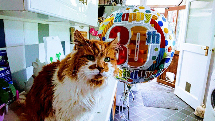 Owner Got A Cat In 1988, Did Not Expect To Throw Him A Birthday Party 30 Years Later, Making Him The Oldest Cat In The World