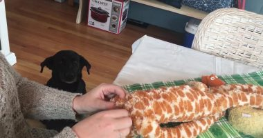dog waits for toy cover