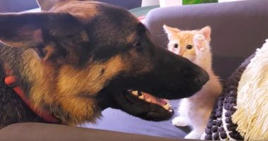 gsd and kitty cover