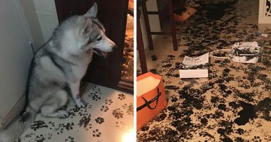 husky redesigns apartment cover