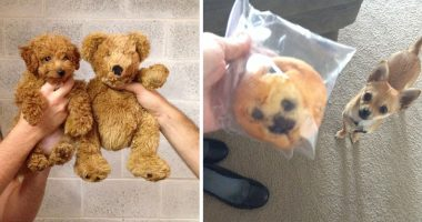 Dogs that look like something else cover