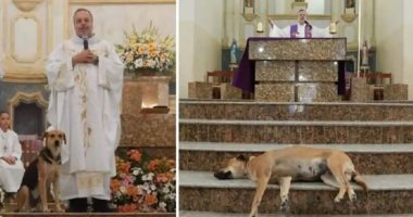 priest brings strays to mass