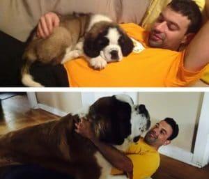 puppy-laying-on-man-and-same-big-dog-laying-on-same-man-years