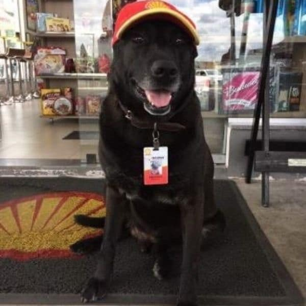 dog-wearing-hat-and-badge